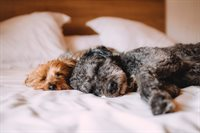 bed-animal-dog-dogs-57627.jpg